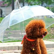 Useful-Transparent-PE-Pet-Umbrella-Small-Dog-Umbrella-Rain-Gear-with-Dog-Leads-Keeps-Pet-Dry-3